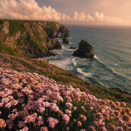 lovely pink ocean nature