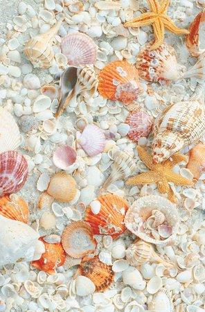 Beach_background