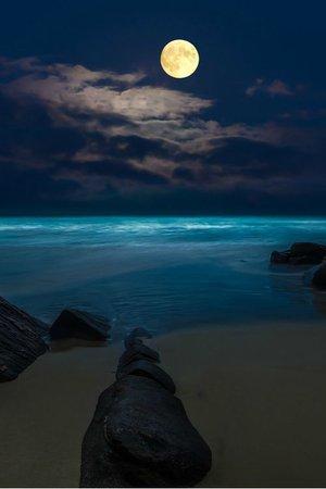moonlit beach - Google Search