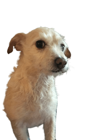 jack (dog)