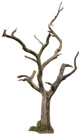 dead tree brown png grey filler