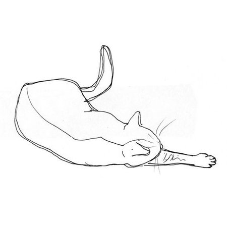 Cat drawing print 3 (£6.44) ❤ liked on Polyvore featuring fillers, drawings, doodles, backgrounds, art, effects, quotes, text, phrase and s… in 2019 | Drawings, Cat drawing, Art drawings