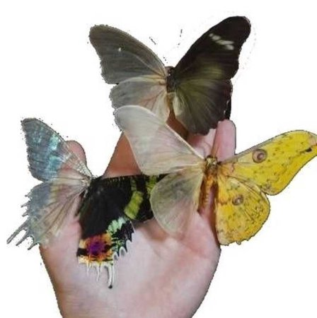 butterfly hand png