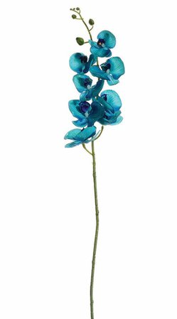 Aqua Blue Phalaenopsis Orchid | Beach Wedding Ideas | Afloral.com