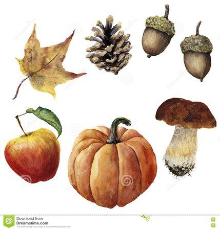 Watercolor Autumn Harvest Set. Hand Painted Pine Cone, Acorn, Pumpkin, Apple, Mushroom And Yellow Leaf Isolated On White Stock Illustration - Illustration of harvest, foliage: 79130835