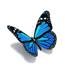 Background Filler | Blue Butterfly