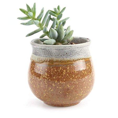 T4U 2.75 Inch Ceramic Summer Trio No.2 succulent Plant Pot/Cactus Plant Pot Flower Pot/Container/Planter Yellow: Amazon.ca: Patio, Lawn & Garden