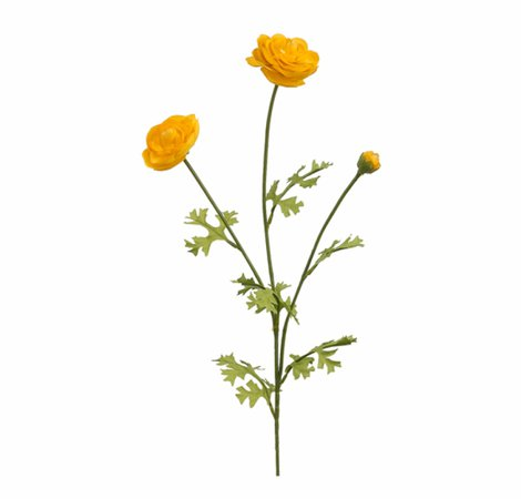 "5"" Ranunculus Spray X3 Yellow - Persian Buttercup Free PNG Images & Clipart Download #2831330 - Sccpre.Cat"