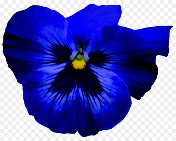 Pansy Flower Blue Violet Petal - pansy png download - 907*715 - Free Transparent Pansy png Download.