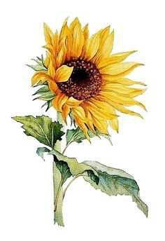 Mafer Sandoval Sunflower - Pinterest