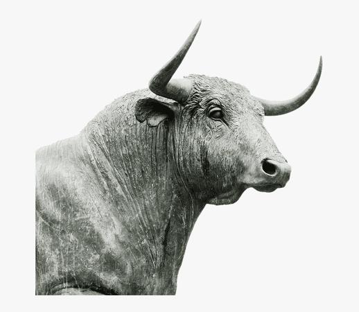 bull head no background - Google Search