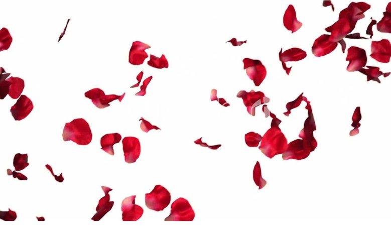 Roses falling