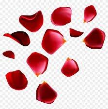 rose petals png - Google Search