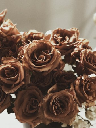 brown roses