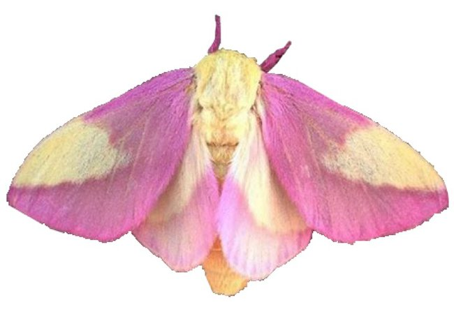 moth filler