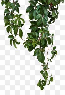 plant vines