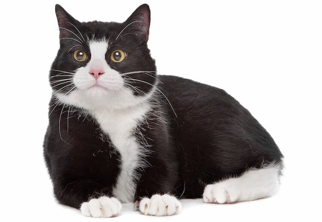 Names-for-a-Black-and-White-Cat.jpg (750×517)