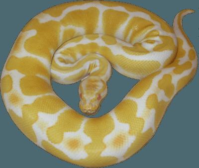 Free albino python PSD Vector Graphic - VectorHQ.com