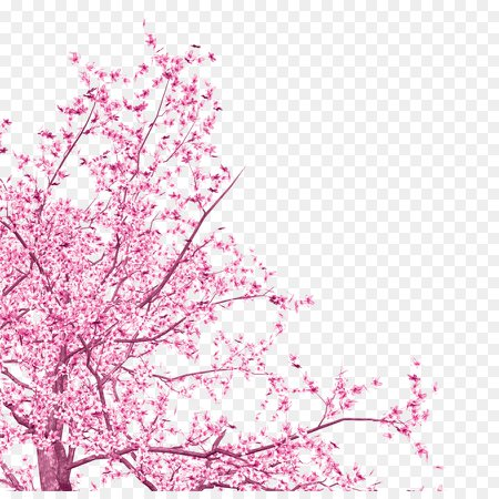 Cherry Blossom Tree png download - 1019*1003 - Free Transparent Cherry Blossom png Download. - CleanPNG / KissPNG