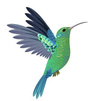 Colibri Vectors, Photos and PSD files | Free Download