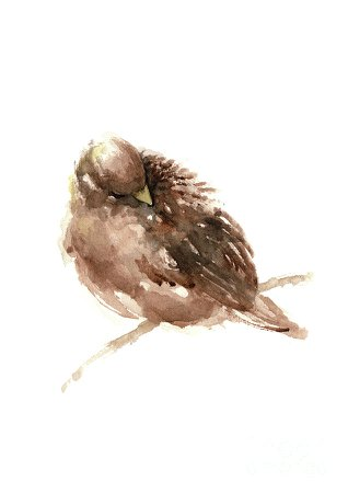 brown birds water color - Google Search