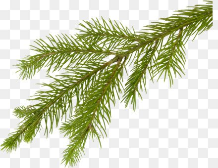 christmas pine cone png
