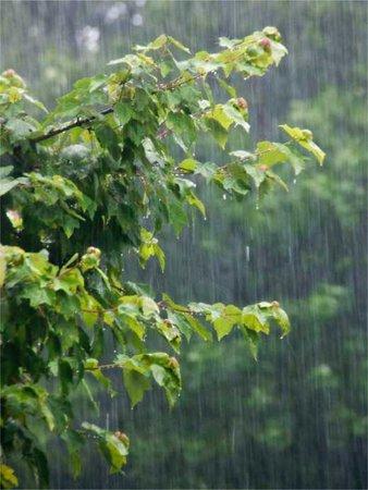 rainy trees