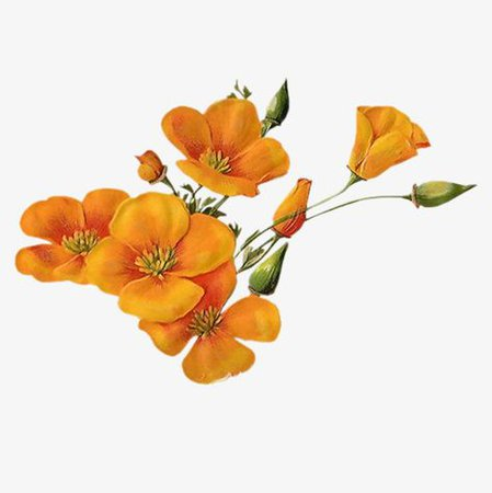orange flower filler png