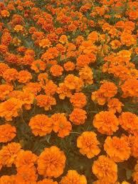 orange aesthetic - Google Search