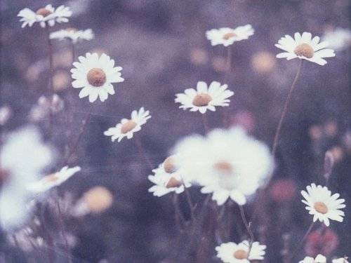 cuteとphotography 、 nature We Heart Itの画像