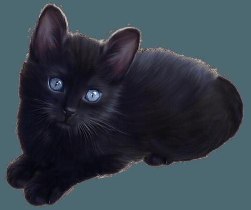 black cat png - Google-Suche