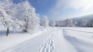 snow - Google Search