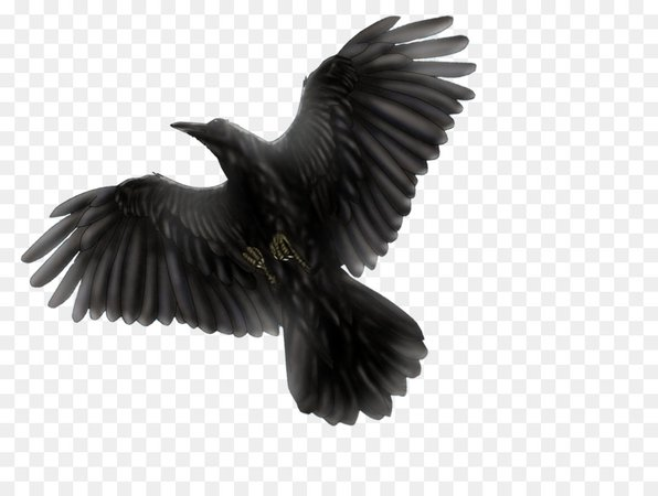 Eagle Cartoon png download - 1097*823 - Free Transparent Bird png Download.
