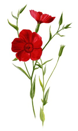 red flower - Google Search