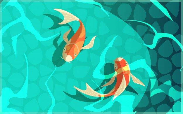 koi in water - Google Search