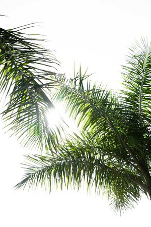 Palm, palm tree, leaf and wallpaper HD photo by Adam Birkett (@abrkett) on Unsplash