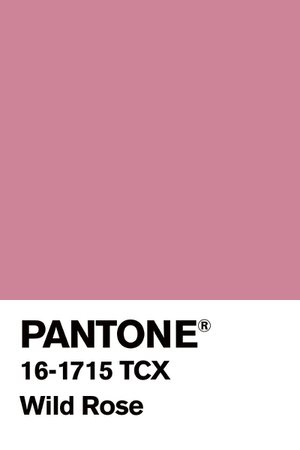 PANTONE Color: Wild Rose