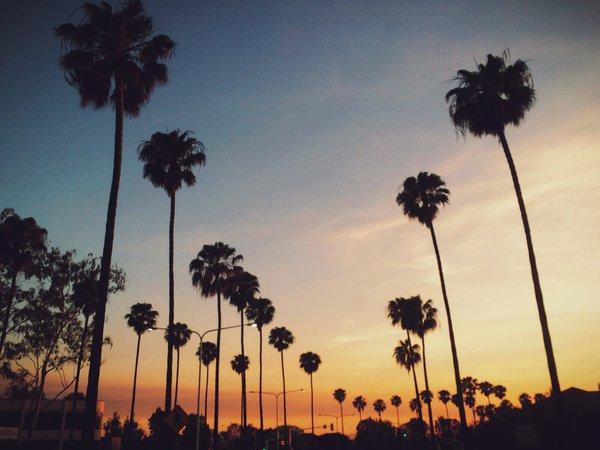 Summer Nights — scanph