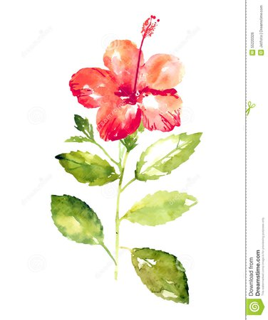 long stemmed hibiscus watercolor - Google Search