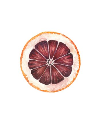 Blood Orange / Watercolor Illustration / Food Illustration / | Etsy