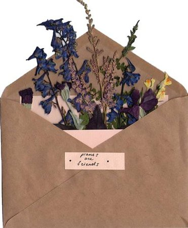 Pressed flowers envelope