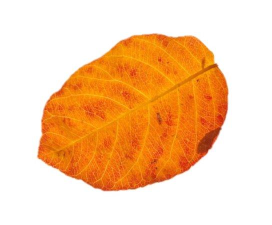 Fall Leaf Filler