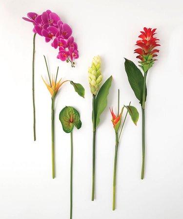 tropical flower stems