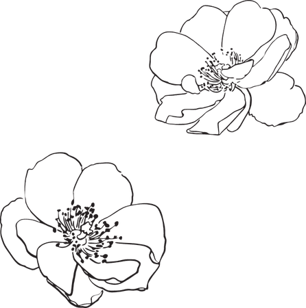 Rose Wild Flower · Free vector graphic on Pixabay