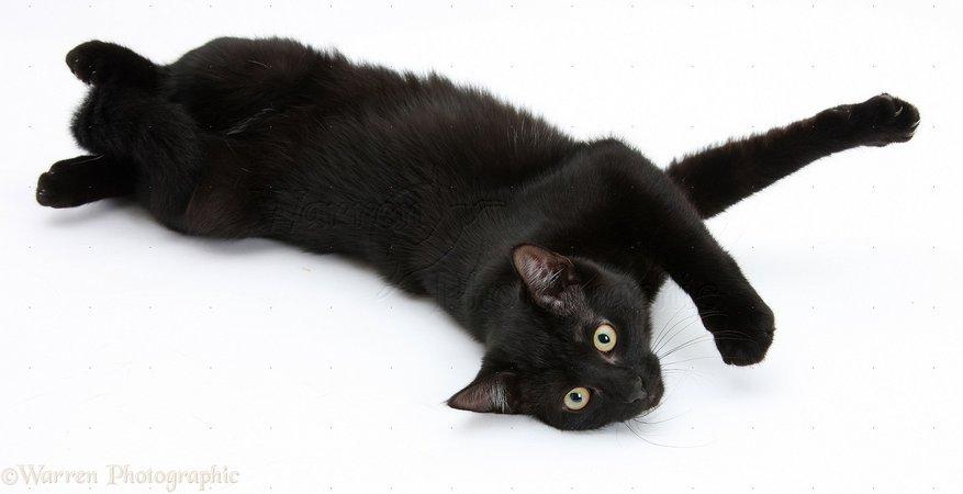 Black cat photo WP21682