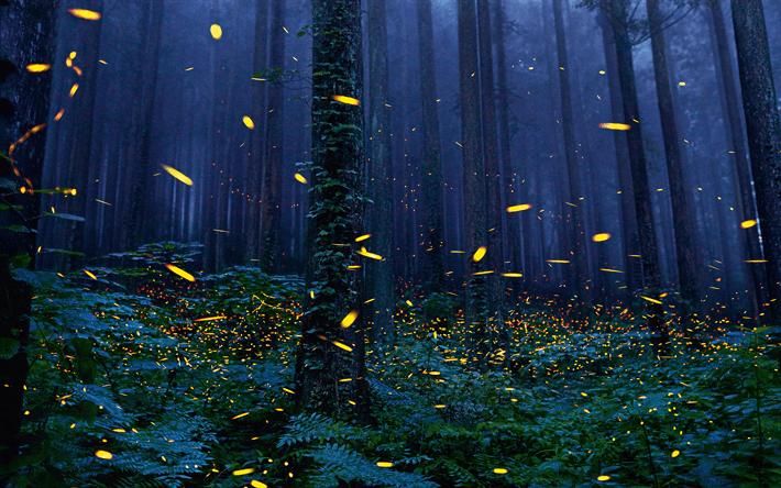 forest, night, 4k, fireflies, ol
