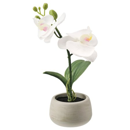 FEJKA Artificial potted plant with pot - indoor/outdoor, Orchid white - IKEA