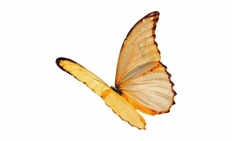 Background Filler | Yellow Butterfly