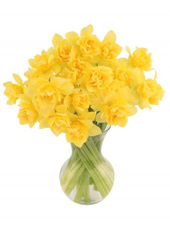 First Sign of Spring Daffodils Bouquet   Spring Flowers   Flower Shop Network