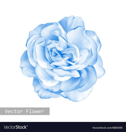 light blue flower - Google Search